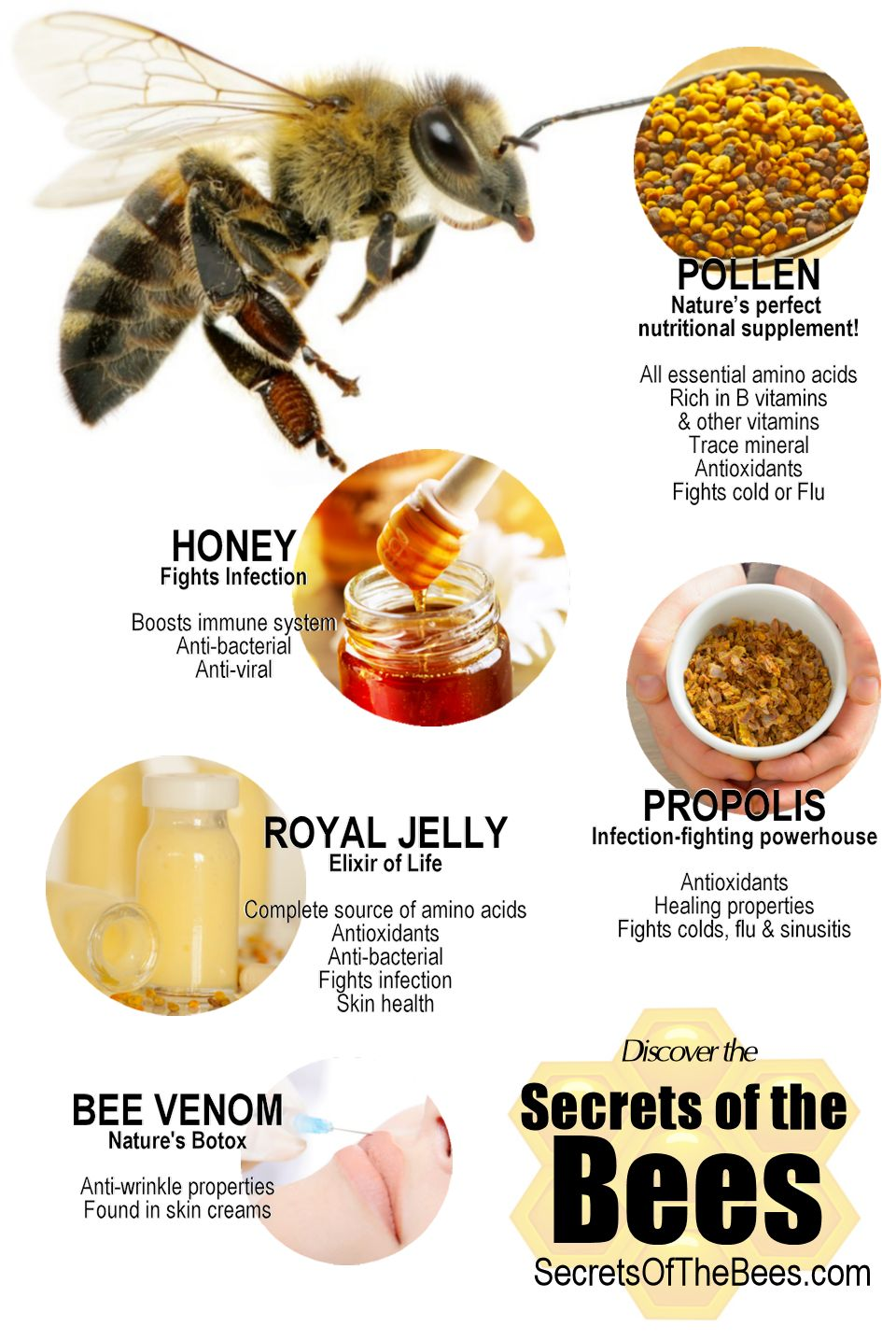 Infographic Secrets of the Bees
